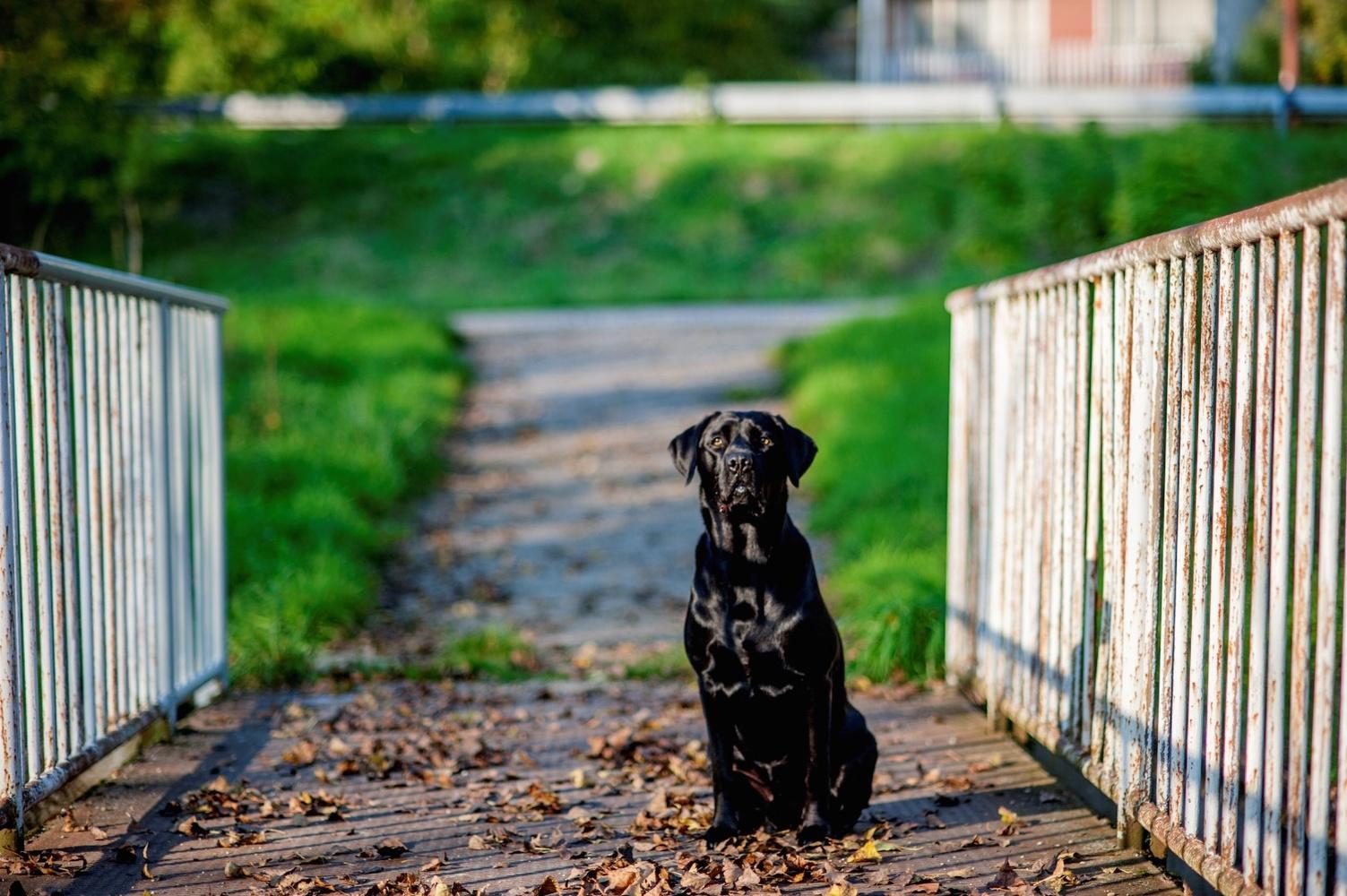http://www.fotoz.sk/images/gallery-9/normal/eskuvoi-fotos_svadobny-fotograf_213.jpg
